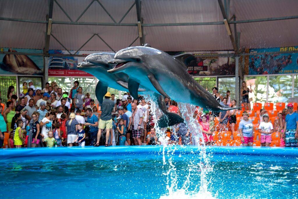 Дельфинарий Джубга