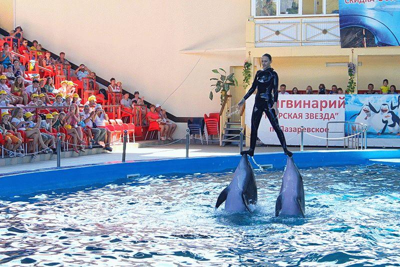 Дельфинарий «Морская звезда»