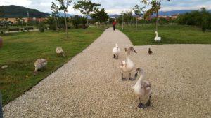 Природный орнитологический парк